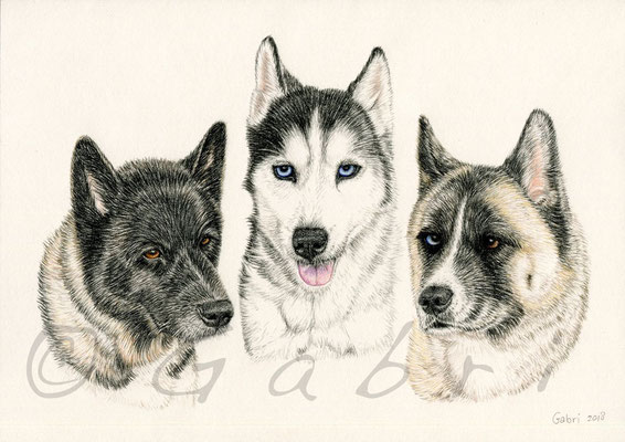 Beau, Klondike & Griz
