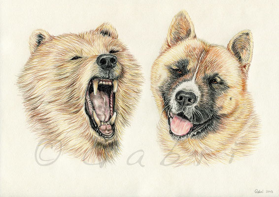 Bear & Amigo