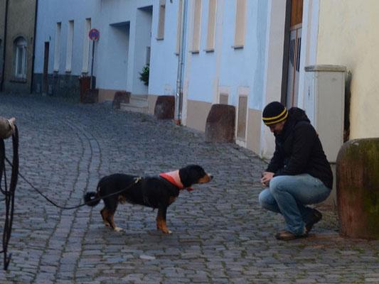 Und so mancher Hund lernt am Ende eines Trails, dass Fremde gar nicht so unheimlich sind und nicht verbellt werden müssen.