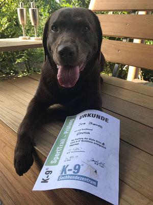 Meisterhafte Leistung: Labrador Emma präsentiert ihre Urkunde für Grün A