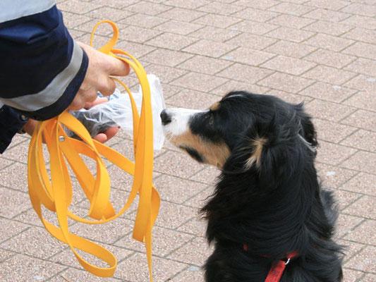 Anreichen vor Trail-Beginn: Am Start erhält der Hund einen Geruchsartikel der versteckten Person. Dieser Gegenstand kann in einer Tüte angereicht werden ...