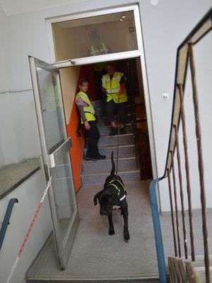 Das Indoor-Ende im Treppenhaus bereitet der Hündin erst mal Kopfzerbrechen