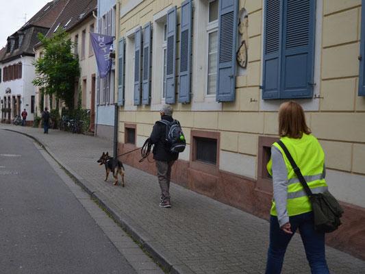 Cleo arbeitet sich aus einem offenen Platz heraus auf die Straße