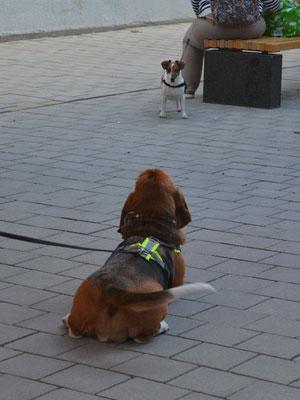 Kaum gestartet, wird sie auch noch von einem anderen Hund betört