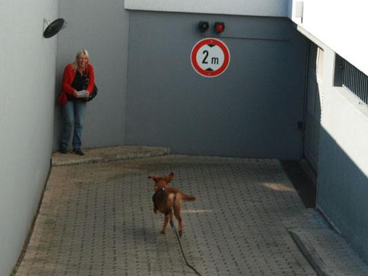 Viele Hunden werden im Endpool - also auf den letzten Metern vor dem Versteck der Zielperson - bereits unruhig und steigern ihr Tempo. Manche sind dann kaum noch zu halten und rennen freudig zu ihrer Versteckperson.