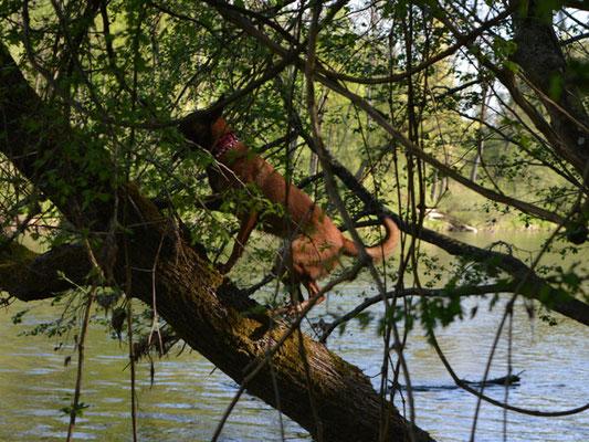 Da wird dann auch mal auf einen Baum geklettert ...