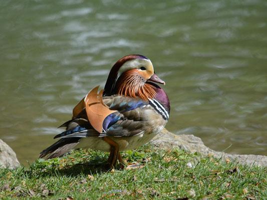 Und dann noch die Enten ...