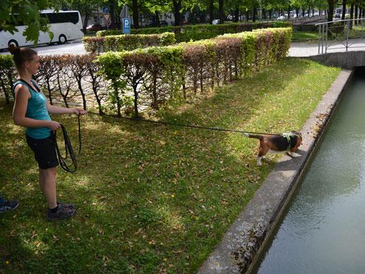 Lotte muss lange über die vielen Geruchsverwirbelungen nachdenken: Park, Wege, Menschen, Autos, mehrspurige Straße, verschiedene Böden - und Wasser