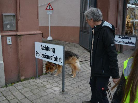 Fina hat endgültig beschlossen, als Polizeihund einzusteigen
