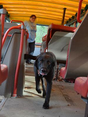 Juhuuu! Cayden hat Fotograf Jochen oben im Doppeldecker-Bus gefunden!