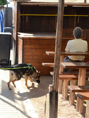 Bis zum Ziel meistern Hunde oft viele Schwierigkeiten, wie hier ein Trail quer über den Bad Dürkheimer Wurstmarkt vor der Eröffnung.