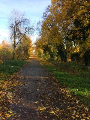 Beautiful November Day - Ein sonniger Spaziergang im Herbst bei buntem Laub.