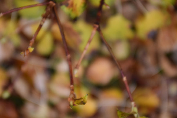 Herbstliches Laub im Wald.