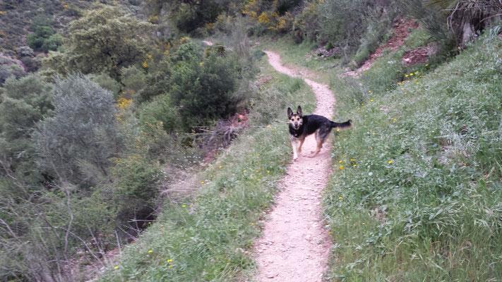 Schon über fünf Kilometer geschafft. Sheila ist noch topfit!