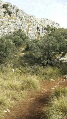 Ein kleines Stückchen flache Strecke ist eine Wohltat. Fühlt sich irgendwie komisch an, nach stundenlangem Bergaufgehen.