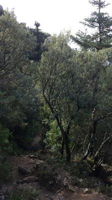Durch dichtes Baum- und Buschwerk führt der Weg.