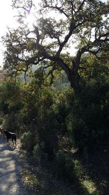 Die vielen Bäume sorgen für ein stetiges Wechselspiel zwischen Licht und Schatten. Wunderschön!