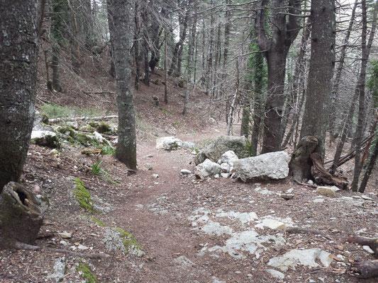 Der Pfad geht nun in einen Waldweg über