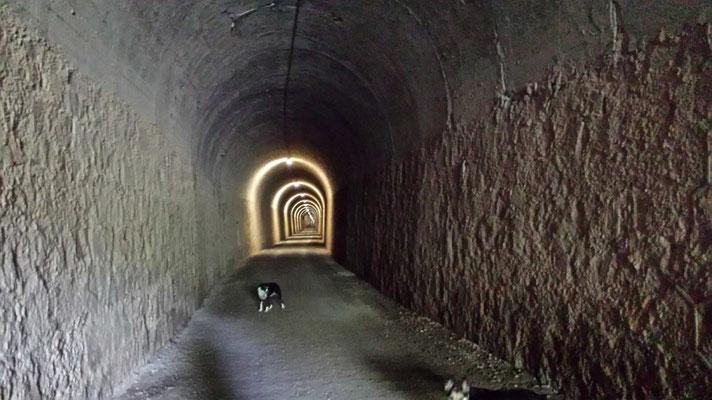 Der längste Tunnel, den wir bisher hatten. In der Mitte kann man aufgrund der Kurve weder Ausgang noch Ende sehen. Kühl ist hier drin auch.