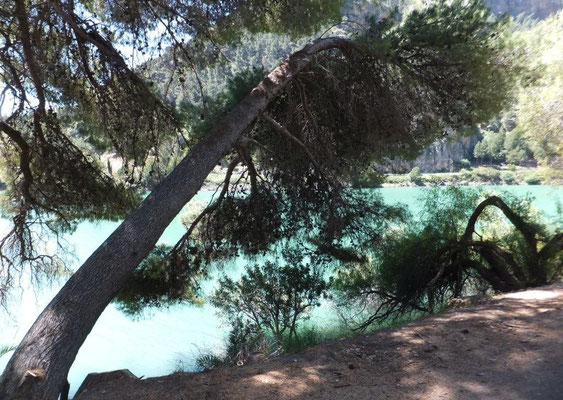 Schräger Baum. Eignet sich hervorragend, um von hier ins Wasser zu springen.