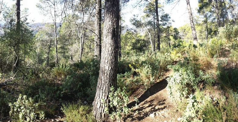 Schöner Waldweg... ich liebe so etwas.