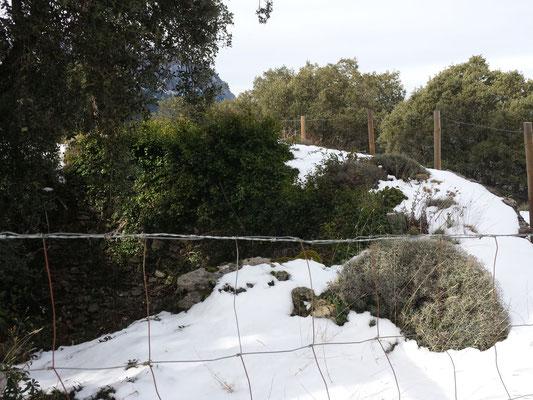 Zaun und Gebüsch umgeben heute den Brunnenrand.