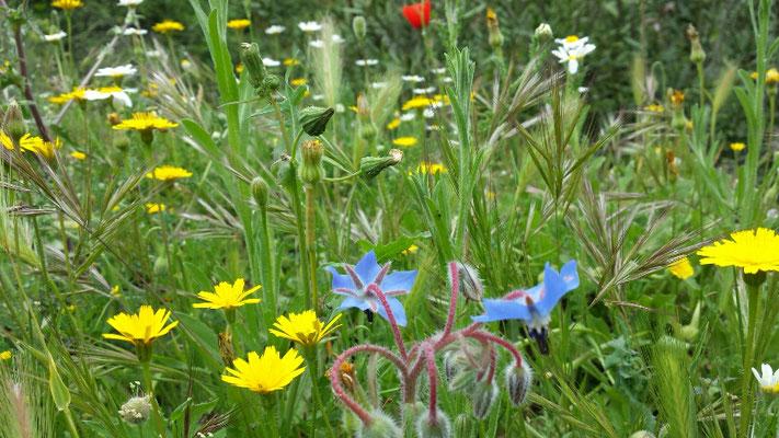 Viele bunte Wiesenblumen längs des Weges