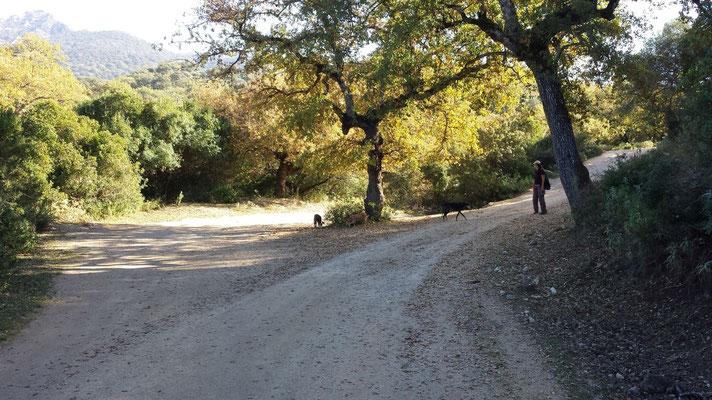 Der erste von zwei Abzweigen nach rechts. Der linke Weg ist Privatweg.