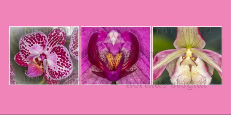 26   Orchidéen 2