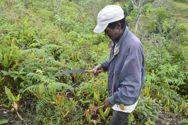 A la découverte des fruits et légumes locaux avec Rakoto