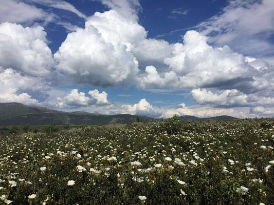 Berglandschaft in Guadalajara