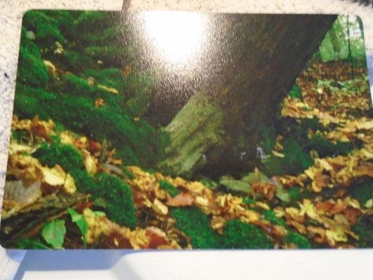 Postkarte aus Zorge