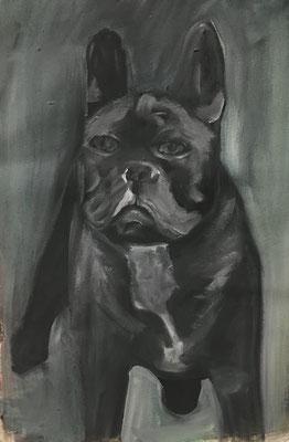 Französische Bulldoge, 43 x 33 cm, Öl auf Leinwand, 2020