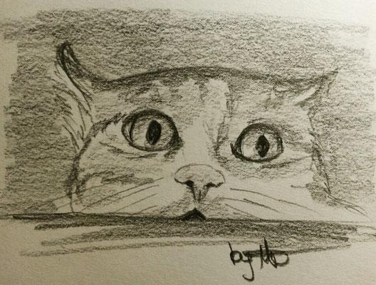 #100kittycats Nr.84