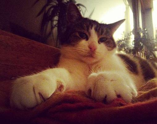 #100kittycats Nr.22... hier mal ein wenig geschummelt ;)