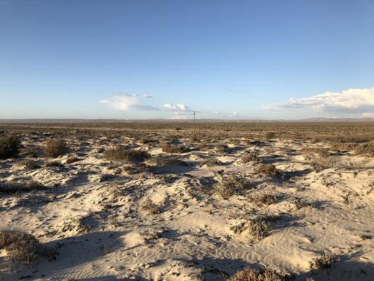 Habitat of Austen's Dune Gecko and Desert Rain Frog.