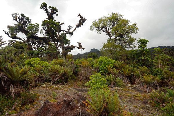 La Turbera at the Panamese border.