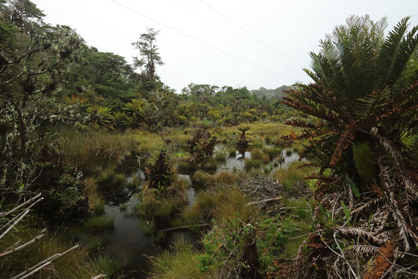 Stunning little bog at around 2600m absl.