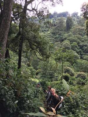 Making our way on elephant trails towards the gorillas. © Gert Jan Verspui