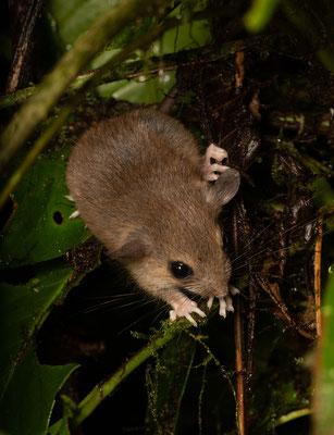Cute little mammal. © Jasper Boldingh