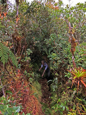 Jelmer crawling through one of the many moss tunnels which were rather frequent on the higher altitudes.