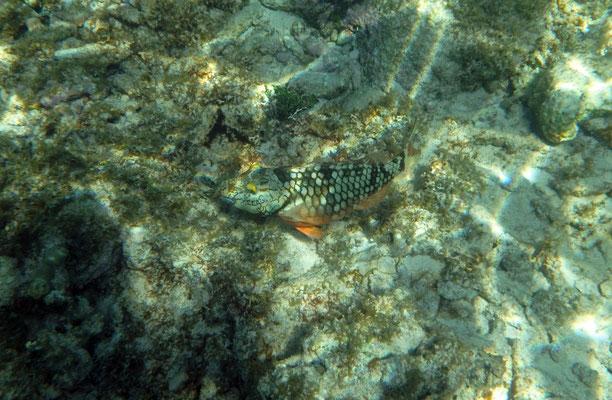 Snorkeling in Akumal.