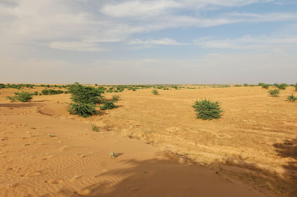 The desert around Dezful.