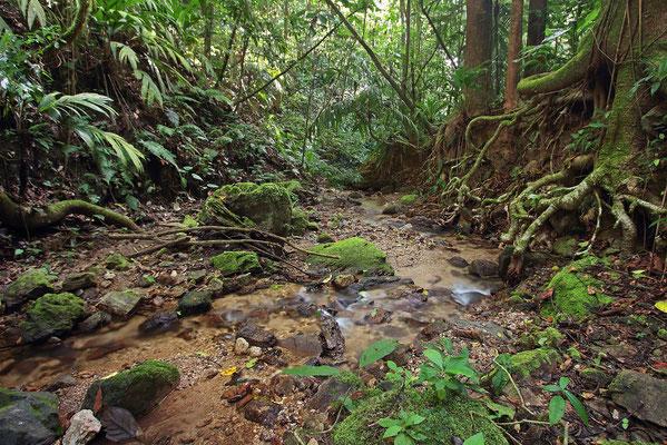 Beautiful forest stream