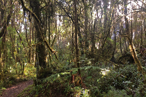 Another beautiful forest but with no easy herping to be had.