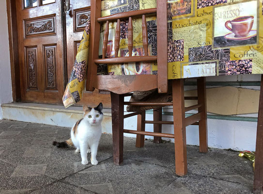 Cute kitty in Olympos