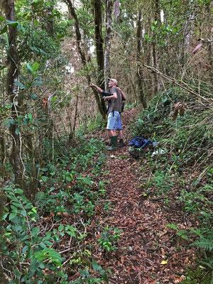 The moment we found a feeding flock of Resplendent Quetzal (Pharomachrus mocinno).