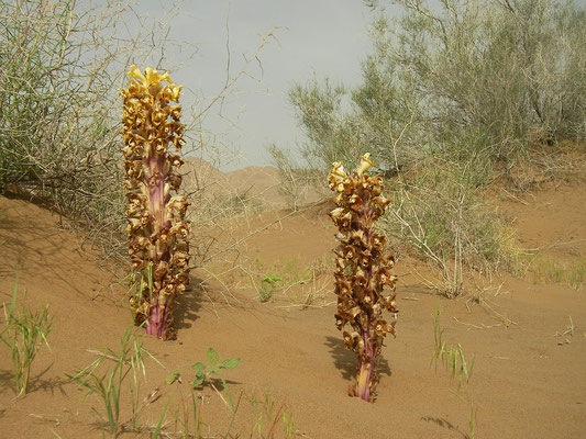 Strange parasitic plants