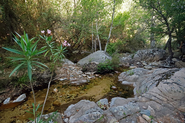 Beautiful stream, habitat of Painted Frog, Tree Frog, Sardinian Brook Newt, Algyroides, Tyrrhenian Wall Lizard, Western Whip Snake, Viperine Snake and Barred Grass Snake.