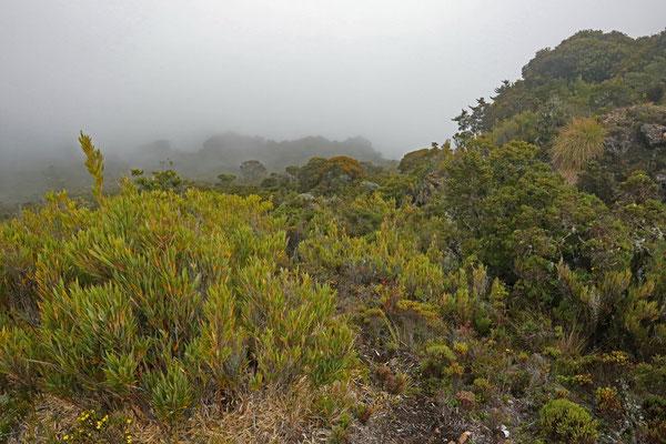 Habitat of Red-legged Webfoot Salamander at above 3000 absl.